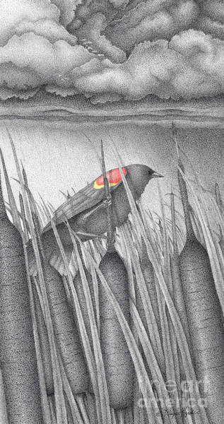 Avian Drawing - Red-winged Blackbird by Wayne Hardee
