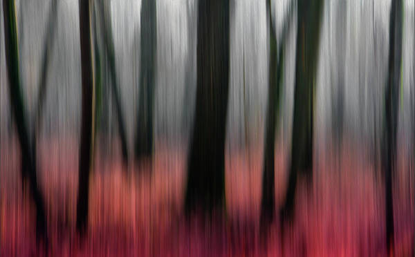 Abstract Impressionism Photograph - Red Wood by Gilbert Claes