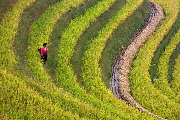 Farm Photograph - Red Yao Girl On Rice Terrace At Harvest by Danita Delimont