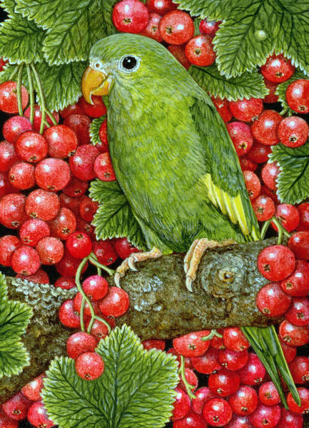 Current Wall Art - Painting - Redcurrant Parakeet by Ditz