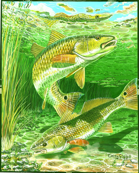 Drum Circle Wall Art - Painting - Redfish Haven In0018 by Carey Chen