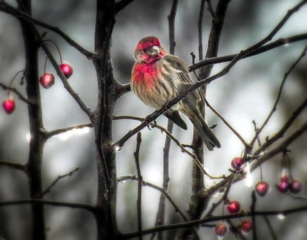 Wall Art - Photograph - Reds Of Winter by Karen Wiles