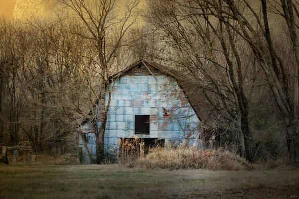 Photograph - Redtail At The Blue Barn by Jai Johnson