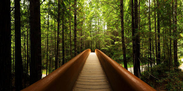 Redwoods Photograph - Redwood Bridge by Chad Dutson