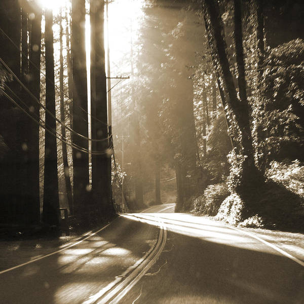 Redwoods Photograph - Redwood Drive by Mike McGlothlen