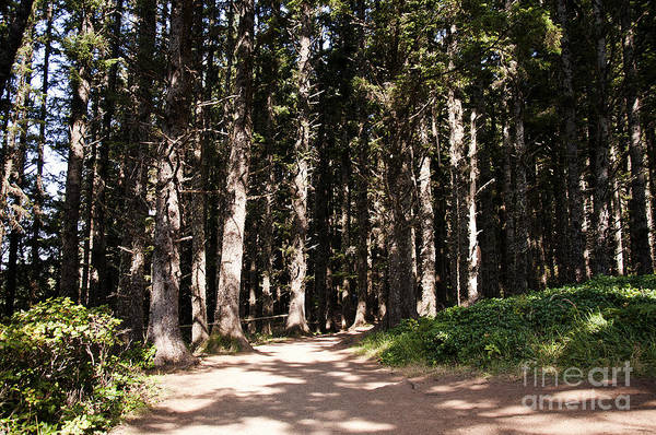 Photograph - Redwood Forest  by Brenda Kean