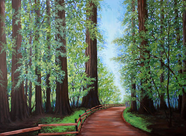 Redwood Forest Path Art Print