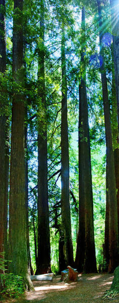 Photograph - Redwoods by Kenneth Hadlock