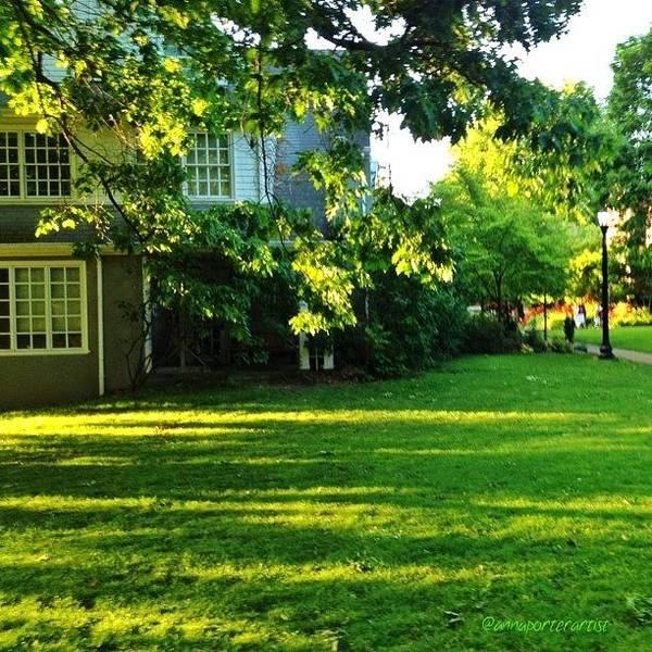 Acrylic Wall Art - Photograph - Reed College Campus Evening Light by Anna Porter