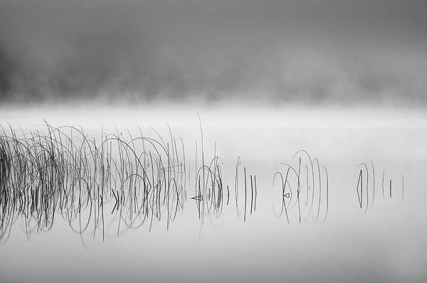 Reed In Fog Art Print by Benny Pettersson