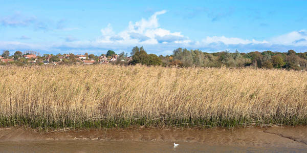 Snape Wall Art - Photograph - Reed Marsh by Tom Gowanlock