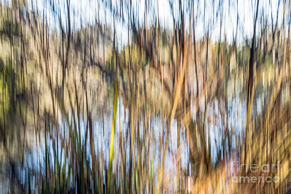 Photograph - Reed Screen by Kate Brown