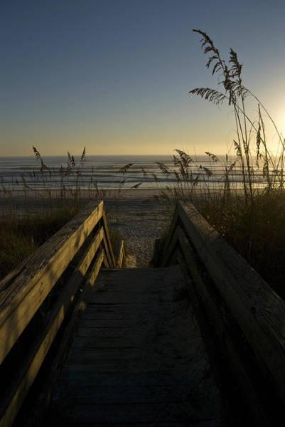 Wall Art - Photograph - Reeds And Boardwalk by Sarah-jane Laubscher