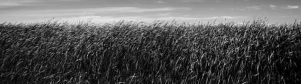 Wall Art - Photograph - Reeds And Sky by Donald  Erickson