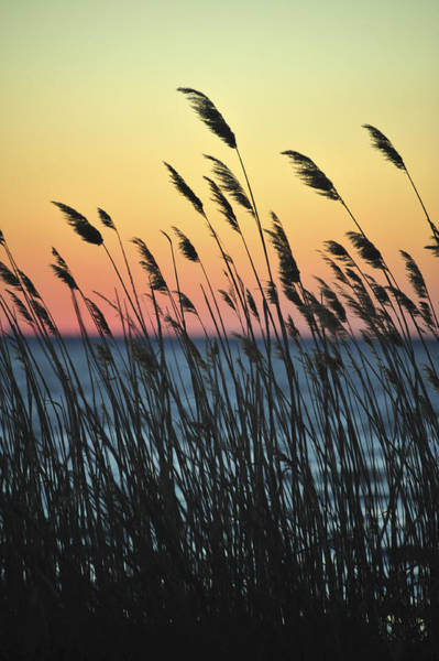 Photograph - Reeds At Sunset Island Beach State Park Nj by Terry DeLuco