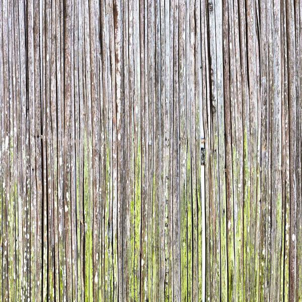 Wall Art - Photograph - Reeds Background by Tom Gowanlock