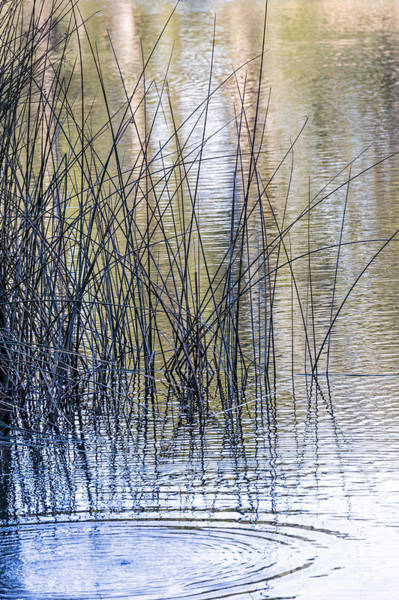 Photograph - Reeds II by Kate Brown