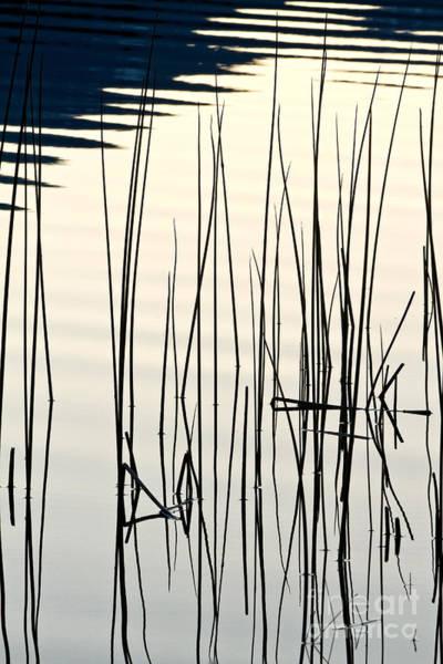 Photograph - Reeds II by Stuart Gordon