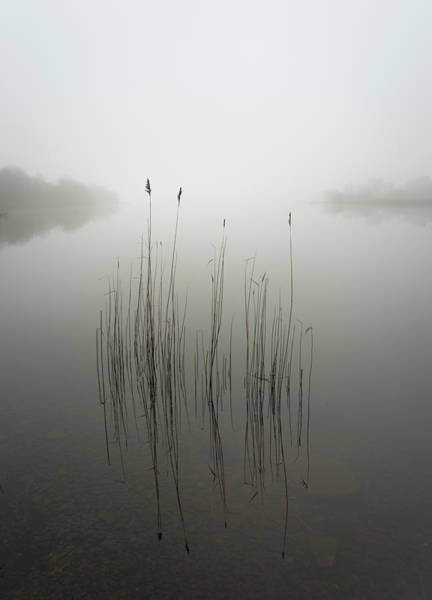 Clear Water Photograph - Reeds In The Mist by David Ahern