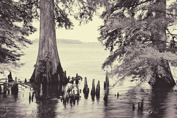 Photograph - Reelfoot In Black And White by Bonnie Willis