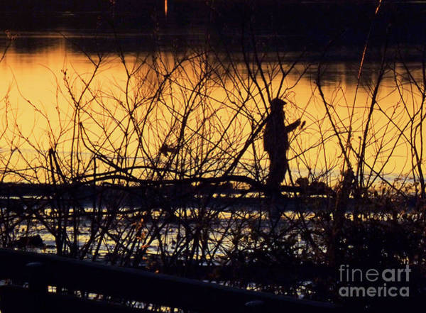 Photograph - Reeling In A New Day by Robyn King