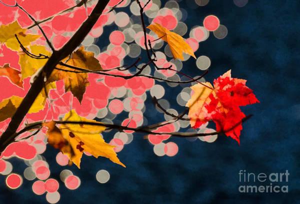 Photograph - Red Maple Leaf by Les Palenik
