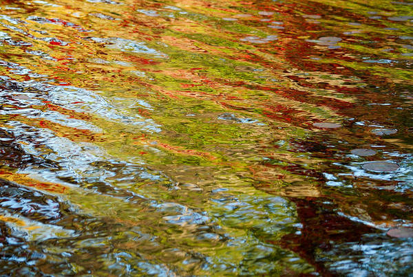 Photograph - Reflected Autumn Colours by Rob Huntley