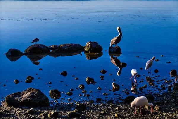 Photograph - Reflecting   by Lars Lentz