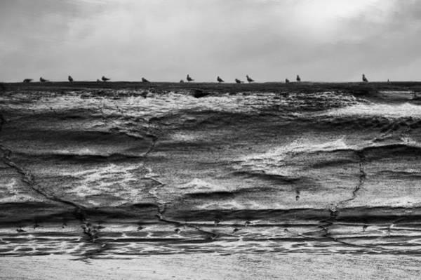 Photograph - Reflecting On Gulls by David Davies