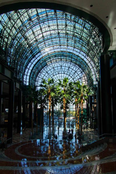 Photograph - Reflecting On Palm Trees And Arches by Georgia Mizuleva