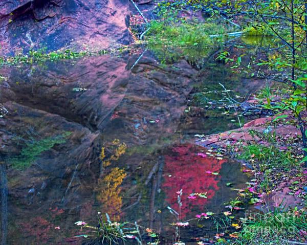 Oak Creek Canyon Painting - Reflection In The Creek by Brian Lambert
