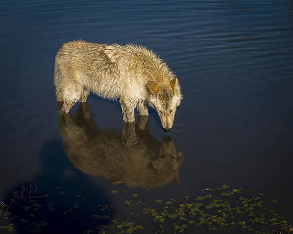 Photograph - Reflection by Jack R Perry
