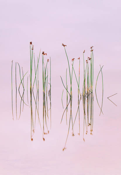 Straw Photograph - Reflection Of Serenity by Yan Zhang