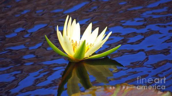Macor Photograph - Reflection Of Sky And Waterlily... by Rob Luzier