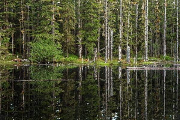 Wall Art - Photograph - Reflection Of Trees In Kettle Pond by Macduff Everton