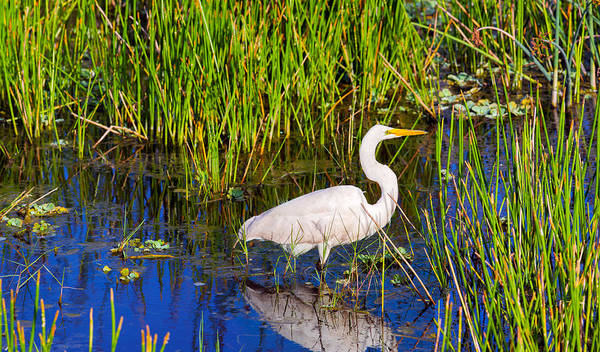 Boynton Photograph - Reflection Of White Crane In Pond by Panoramic Images