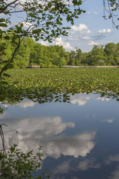 Photograph - Reflection Smithville Lake New Jersey by Terry DeLuco