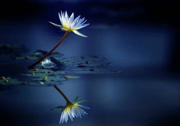 Blue Water Photograph - Reflection by Takashi Suzuki