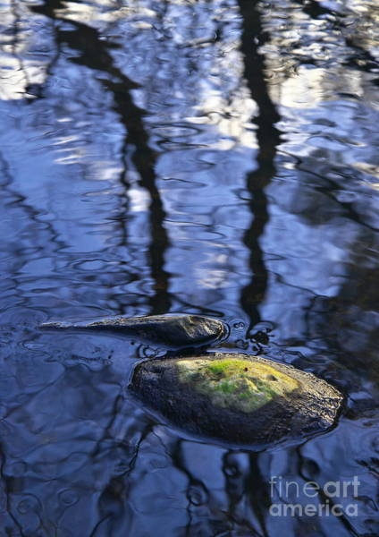 Photograph - Reflections And Rocks In Nature by Martyn Arnold