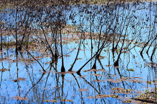Brazos Bend State Park Wall Art - Photograph - Reflections And Silhouetted Trees by Louise Heusinkveld