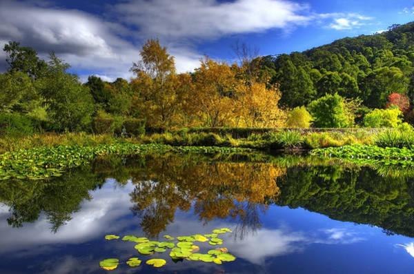 Lilly Pad Photograph - Reflections by Damian M Photographer