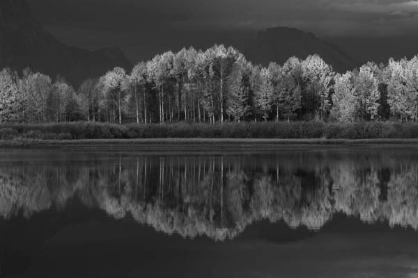Photograph - Reflections by David Andersen