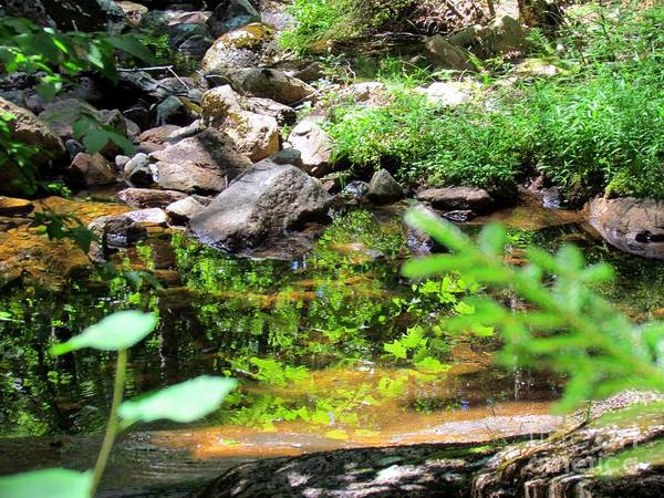 Treen Photograph - Reflections In The Stream by Elizabeth Dow