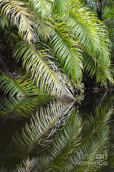 Chapa Photograph - Reflections Marimbus River Brazil 1 by Bob Christopher