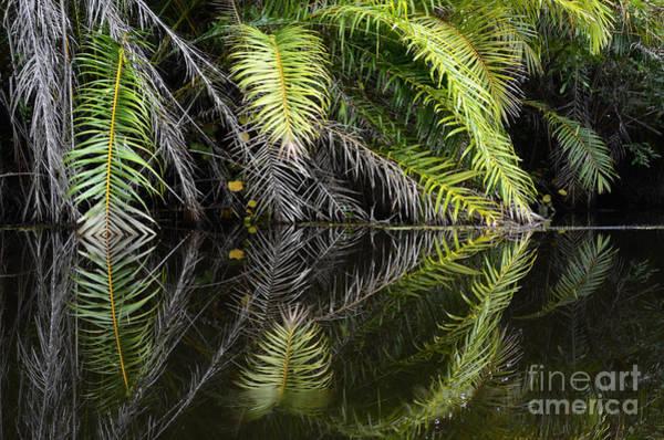 Chapa Photograph - Reflections Marimbus River Brazil 2 by Bob Christopher