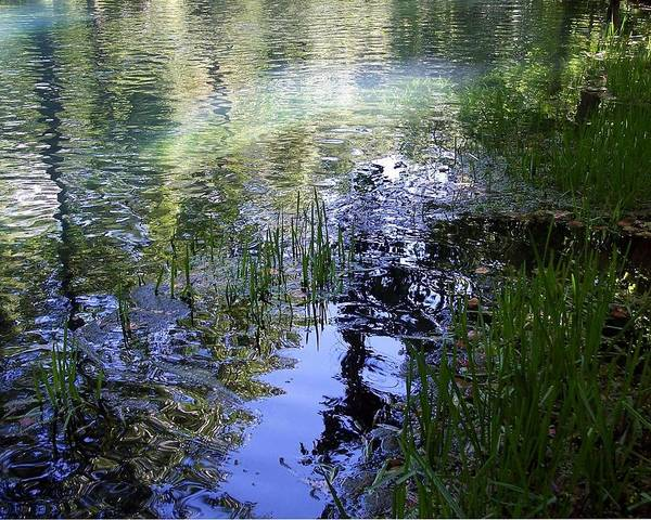Photograph - Reflections  by Mary Wolf