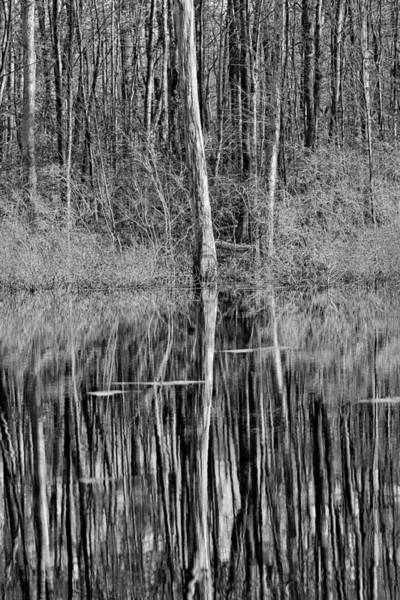 Photograph - Reflections Of A Swamp by Dawn J Benko