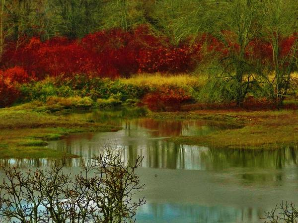Photograph - Reflections Of Autumn by Charles Lucas