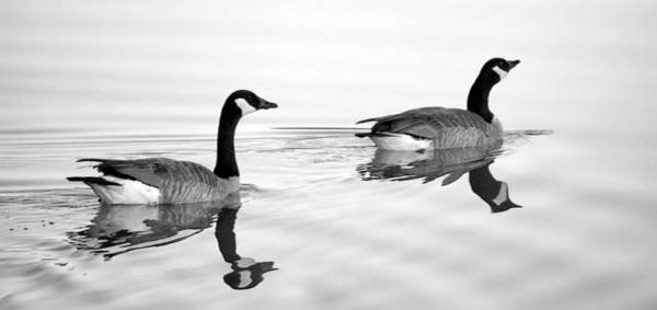 Photograph - Reflections Of Geese by Jason Politte