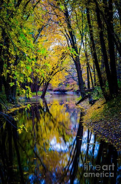 Photograph - Reflections Of Life by Michael Arend